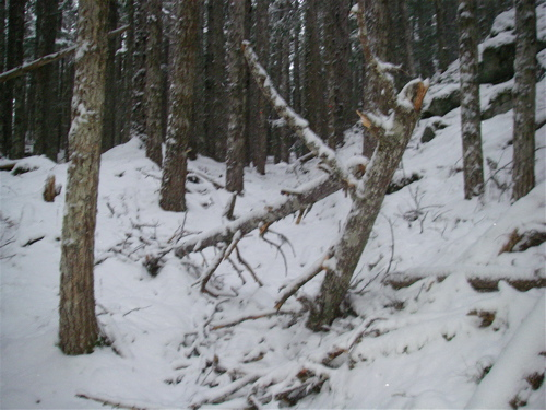 The treetop in the trail (yes, that IS a trail!).