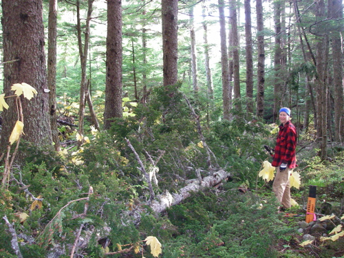 winfall on the trail