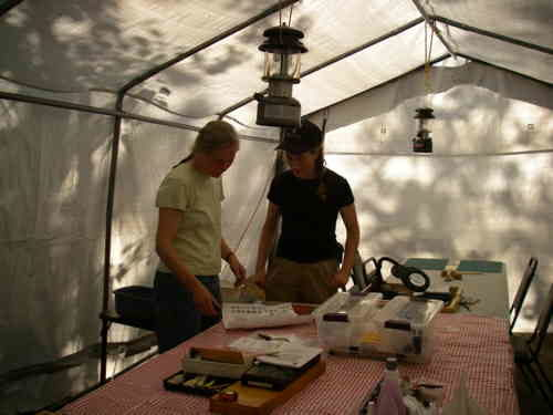 archaeological cataloging tent