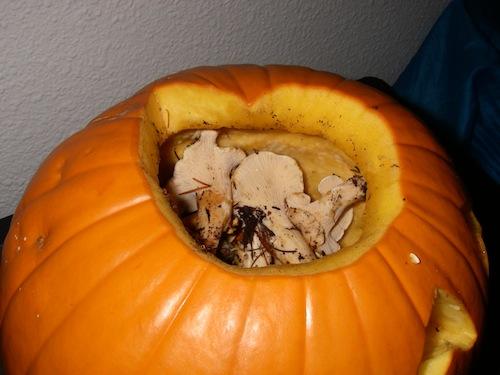 A pumpkin full of chanterelles