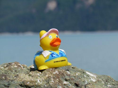 The Skagway Duck Derby Escapee (Photo: Mark A. Zeiger).