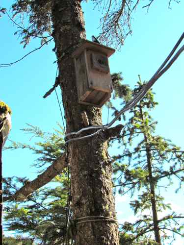 Newly relocated birdhouse. The solar panel lines below it should provide good perches (Photo: Mark A. Zeiger).