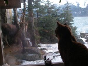 cat watching moose through window