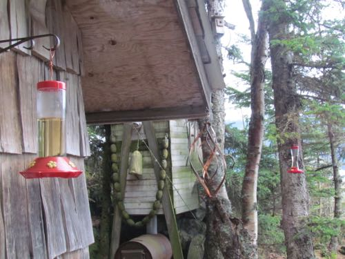 The feeders are ready for when guests arrive (Photo: Mark A. Zeiger).