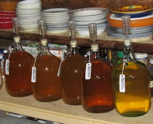 Five gallons of birch wine, good to go (Photo: Mark A. Zeiger).