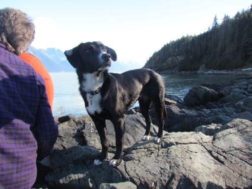 Lettie O, Adventure Dog! (Photo: Sarah A. Zeiger.)